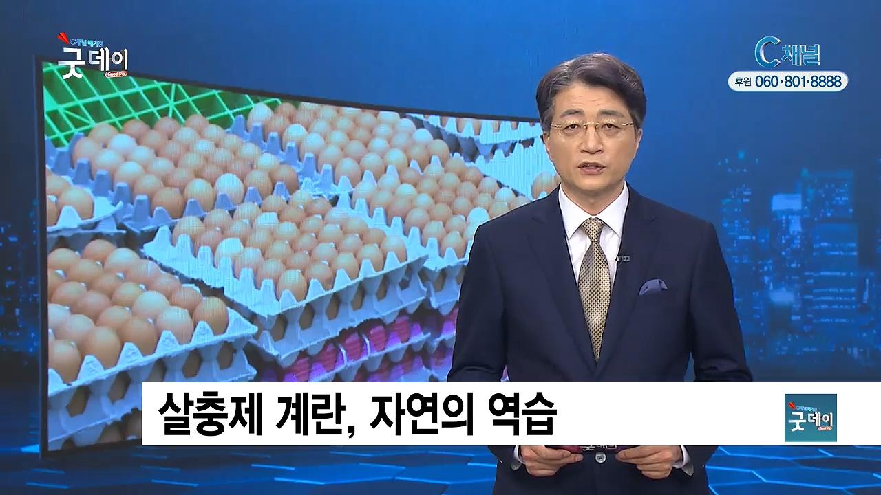 C채널 매거진 굿데이 2017년 8월 21일